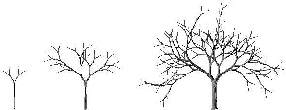 Chapitre 4 : Les matrices d'évolution : une méthode de modélisation de la croissance de structures ramifiées binaires