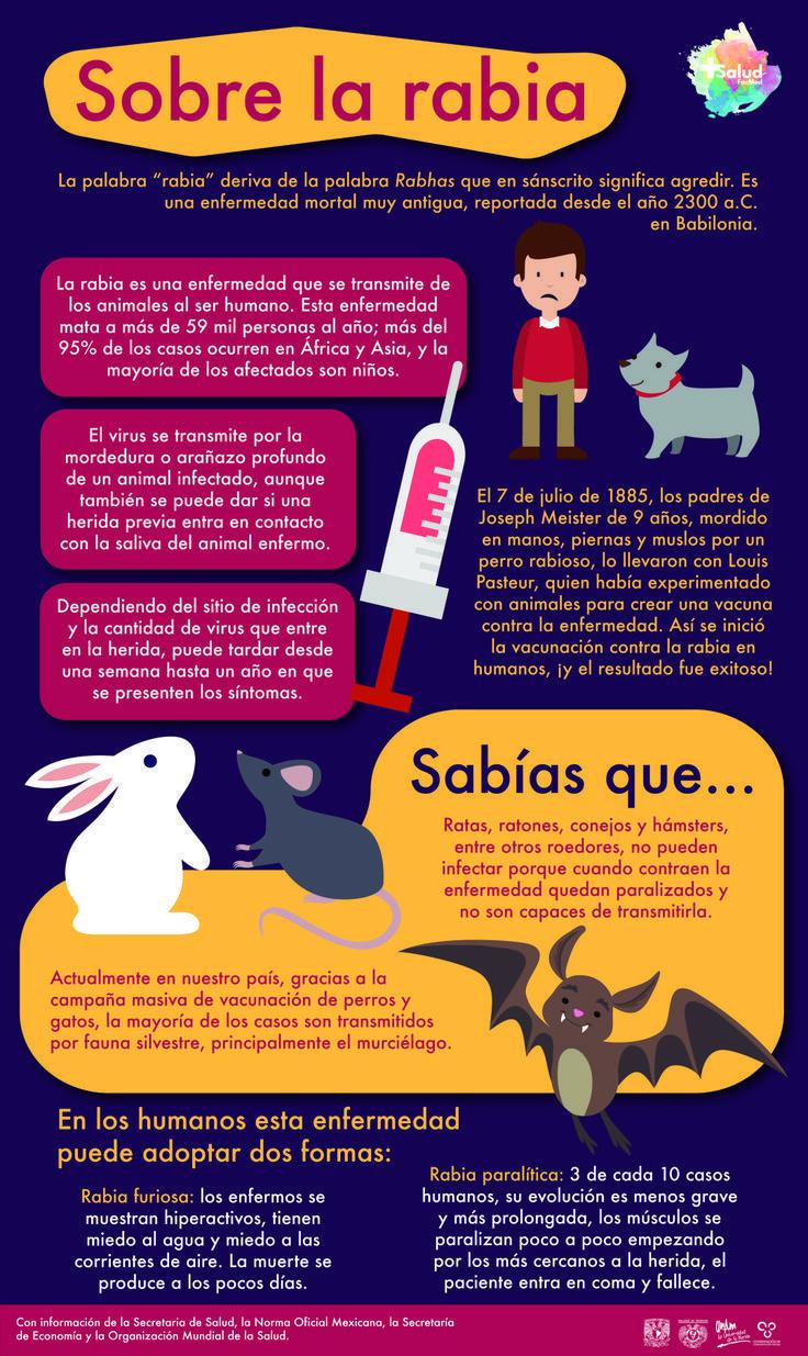 gatos enfermedad zoonotica