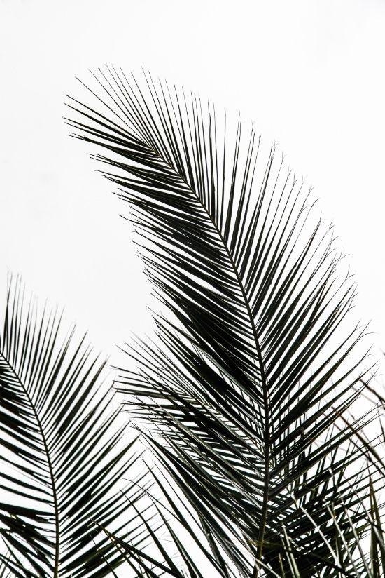 Best 25+ Black and white prints ideas on Pinterest | White art ...