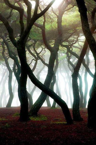 Take me to the trees.  I'll climb them, feel them, smell them, hug them :)