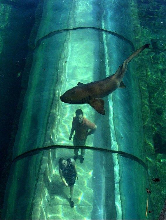 バハマ諸島、アトランティスの「捕食者」潟 想像してみて、1つの漂うパイプに心身をリラックスして、梭鱼とハンマーサメはあなたの頭をパトロールする。よかったね!