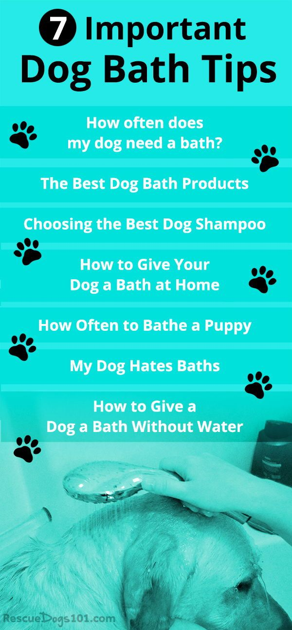 7 Important Dog Bathing Tips Dog Care Tips Dog Bath Dog