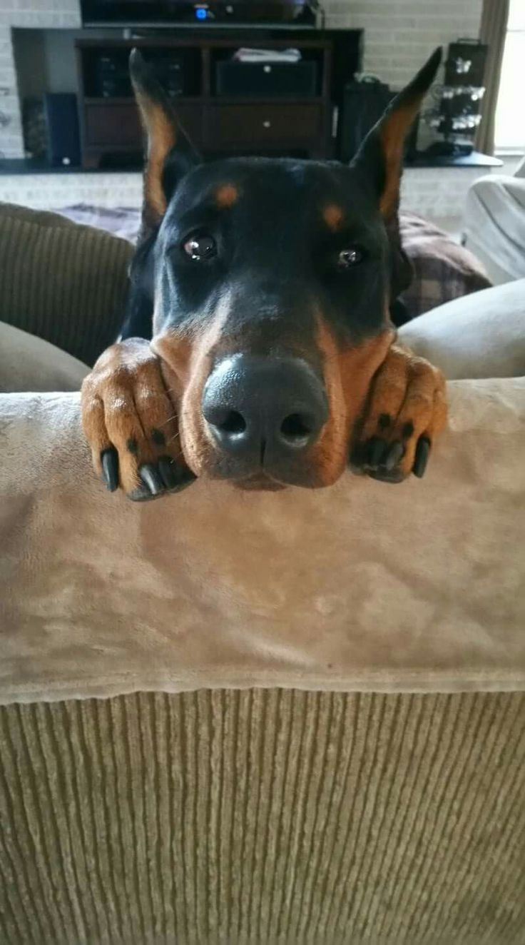 best animals images on pinterest camel camels and funny animals