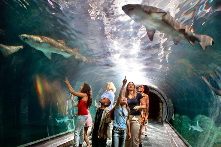 Top 50 Must-See Attractions In Philadelphia — Visit Philadelphia — visitphilly.com