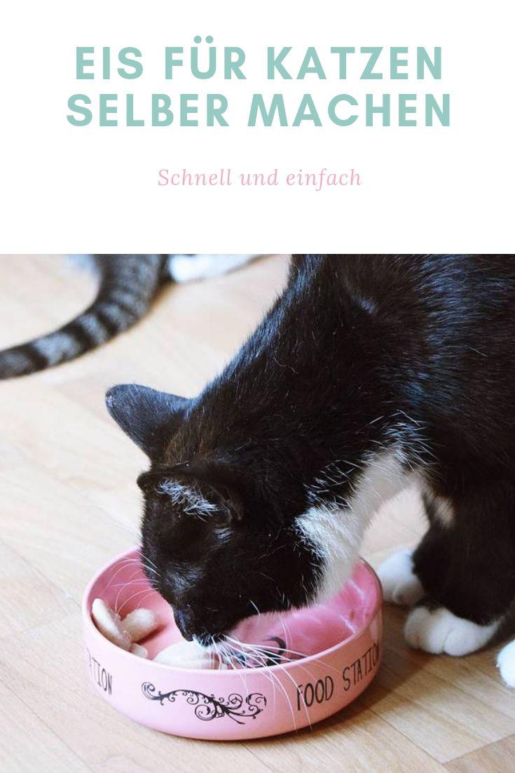Eis für Katzen selber machen – Erfrischung für heiße Tage