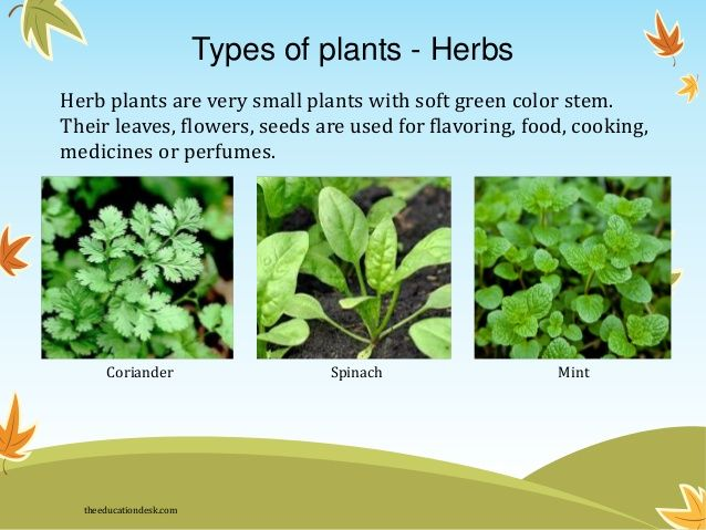11 Best Medicinal Plants Images On Pinterest Herbs