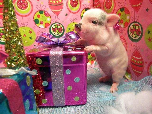 Look at him go!! He wants that present @Alanea White