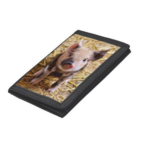 Cute little pig closeup piglet piggy photo tri-fold wallets - click to get yours right now!