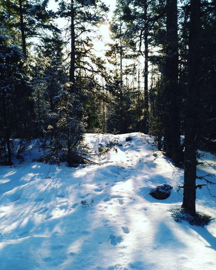 Ihanaa kevät on tulossa!  The spring is coming to Finland! #kevät #kevättulee #spring #march #maaliskuu #igfinland #thisisfinland #visitfinland #igscandinavia #visitscandinavia #metsässä #lenkillä #outdoors #wilderness #intheforest #sun #sunshine #sunrays #nature #beautiful #pretty #trees  #beauty #light #photooftheday #weather #day #mothernature