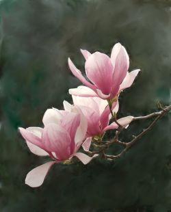 Lawn and Garden Decor - japanese magnolia tree