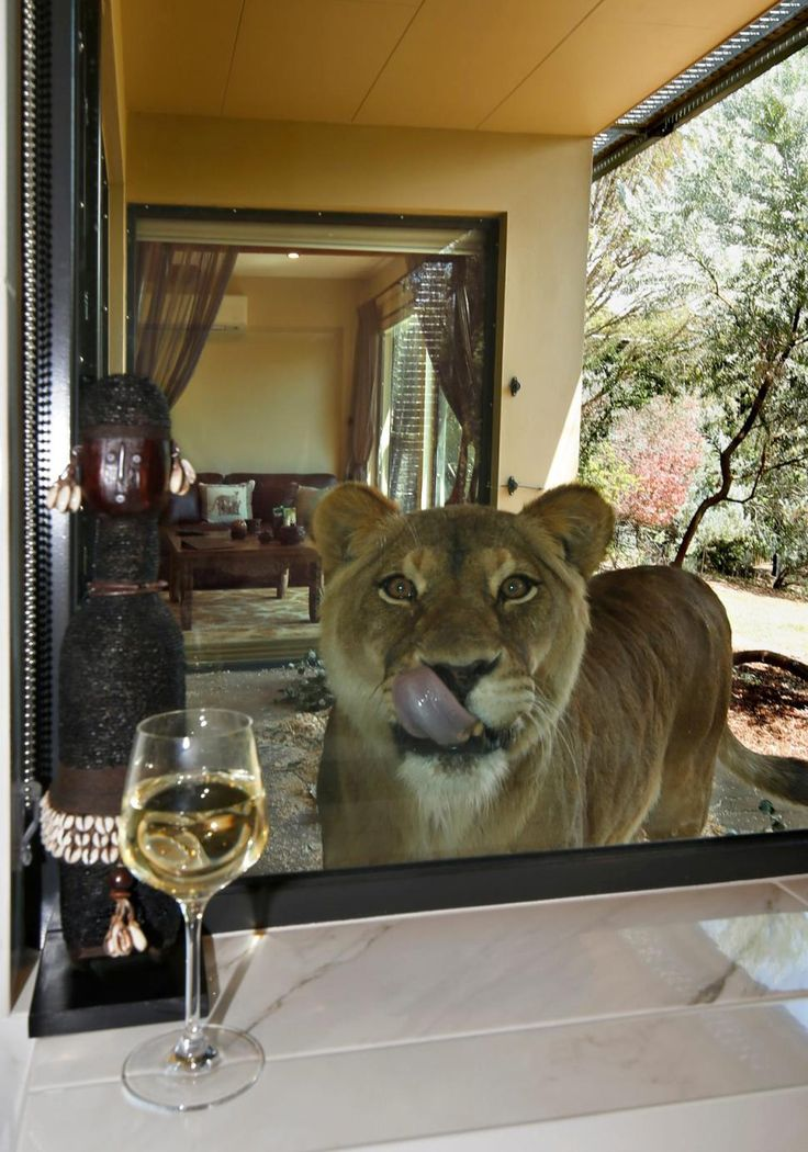 Australia's Jamala Wildlife Lodge provides guests with rooms within the habitat of animals.