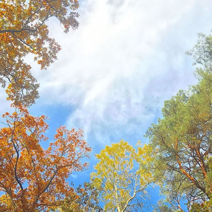 Kampinos National Park. . #familywalk #walkwithkids #homeschooling #homeschoolingmom #homepreschool #autumn #familytrip #kampinos #kampinoskiparknarodowy #kampinosnationalpark #way #bluesky #sky #autumnforest #simplelife #theartofsimple #slowlife #slowliving #relax #recharge #forestbathing #colorfulleaves #colorfulforest #explore #perfectday #perfect #day #landscapephotography #neverstopexploring #getoutside