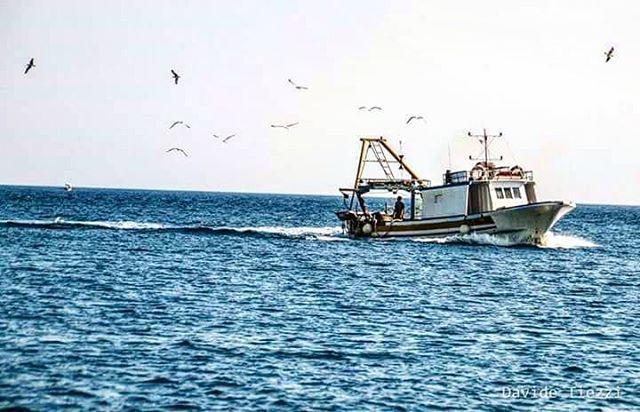 """""""Salento week 📷 4 - * Nottata di lavoro finita per qualcuno, c'è il mercato che aspetta! * #travelswap #salento #fishing #working #sea #panorama #travelblogger #travelphotography #photographer #nikon #truelife #boat #sky #landscape #gallipoli #mare #morning #gabbiano #seagull #landscape_captures #landscape_lovers #people #italy #south #weareinpuglia #sealovers #apulia #puglia"""" by @davidetiezzi (Davide Tiezzi). #turismo #instalife #ilove #madeinitaly #italytravel #tour #passportready…"""