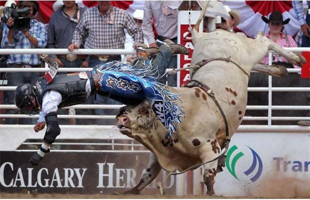 Tyler Thomson from Black Diamond, Alberta is bucked off Team Paige  during the Calgary Stampede Bull Riding Championships at the Calgary Stampede in Calgary, Alberta on July 8, 2012
