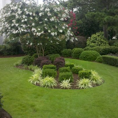 Crape Myrtle Landscaping  White Crape Myrtle in an Island Bed