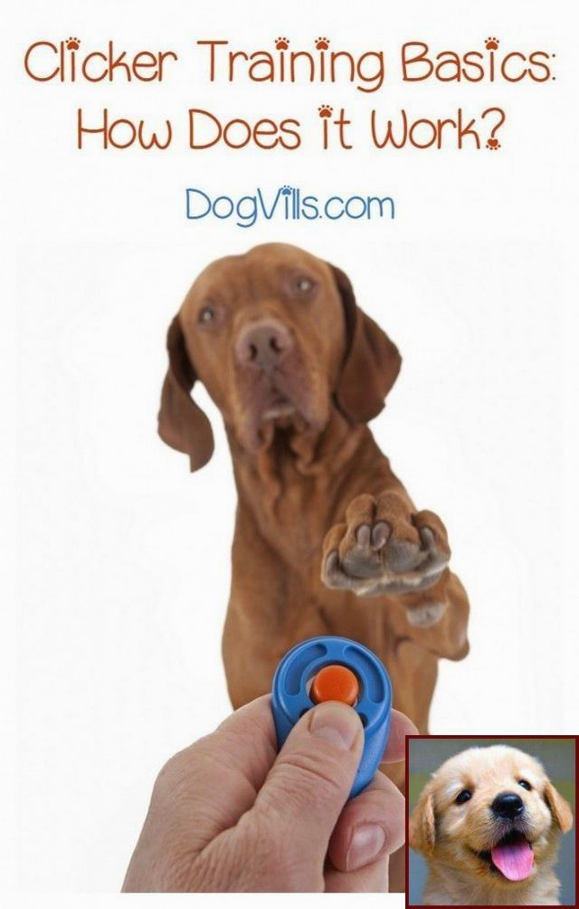 What Is House Training A Puppy And Dog Behavior After Being Lost