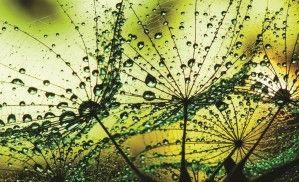 Fototapeta Consalnet 1009 - Zielone krople
