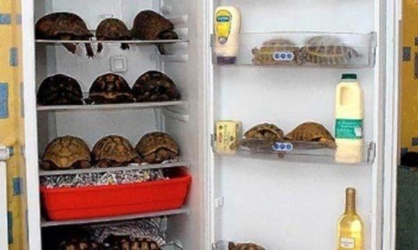 @cristian32 Mi viejo encontro un repasador dentro de la nevera. La otra vez yo encontre un desodorante. Que encontratron ustedes fuera de lugar en sus heladeras?