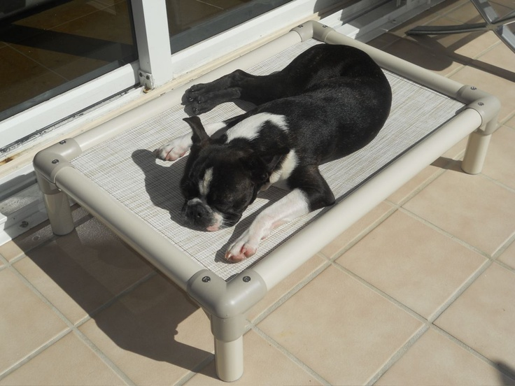 This French bulldog is enjoying a cool spot on a hot