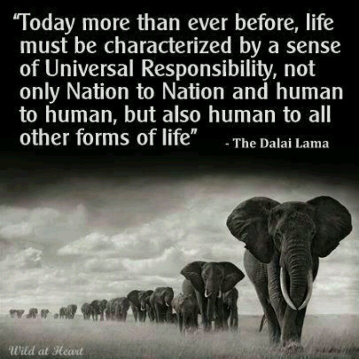 universal responsibility humans must respect all life