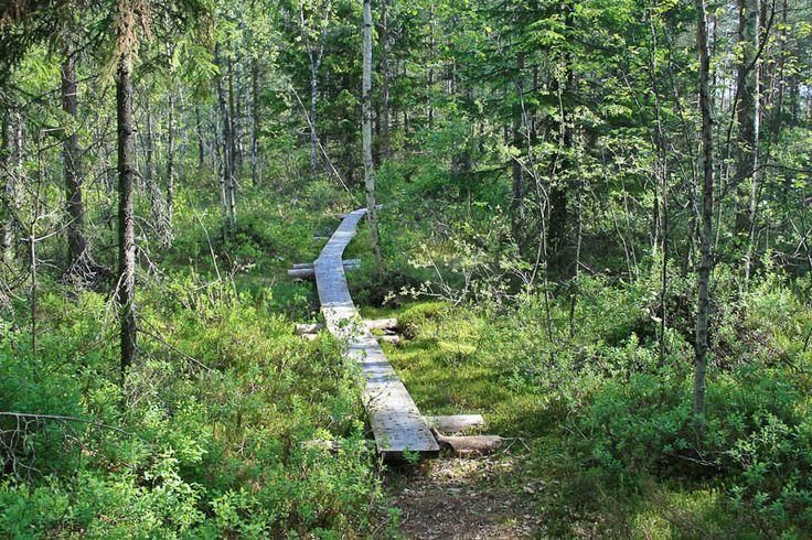 Palakoski - Vihti - southern Finland