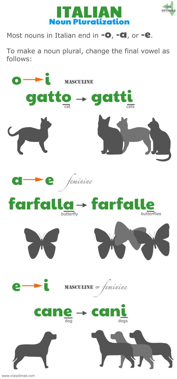 Italian pluralization patterns, Italian plurals: o to i, gatto to gatti; a to e, farfalla to farfalle, e to i, cane to cani; www.viaoptimae....