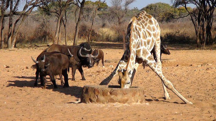 Waterberg plateau national park, Namibia. Photo: Christa Fris