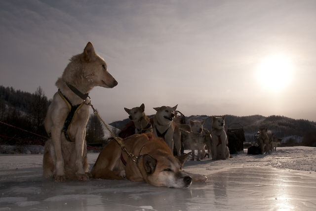 Episode 29: Dog-sledding in Mongolia - a journey in the wild wilderness. by Andrew MacLeod. Dog-sledding in Mongolia: a journey into the wild wilderness.