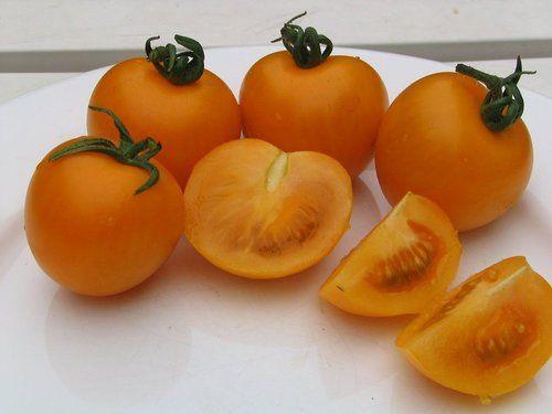 Sungold Tomato 4 Plants - Super Sweet