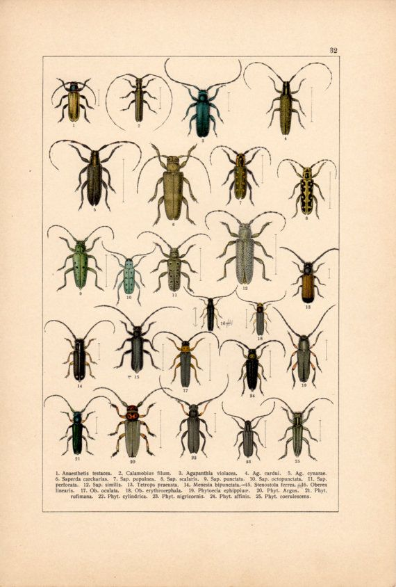 Longhorn Beetles Antique Print Insects Vintage by Craftissimo, €14.00