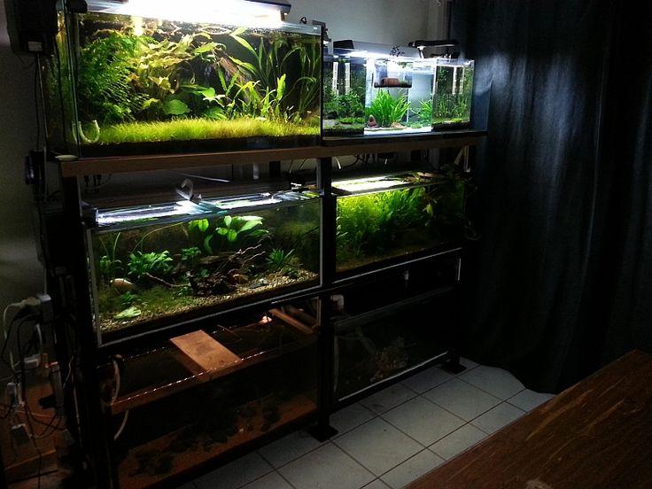 6 Tank Rack   Pets - Aquarium Stands and Racks