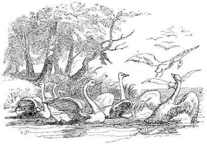 elisa e os cisnes - Pesquisa Google