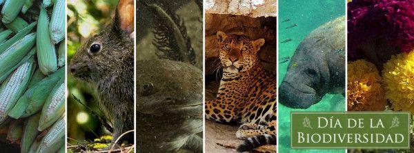 Día de la diversidad biológica México - Por un mundo mejor RG Iluminación y energía www.rgiesa.mx