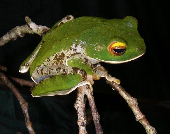 From Madagascar