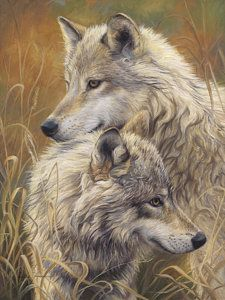 Wolves Painting - Together by Lucie Bilodeau