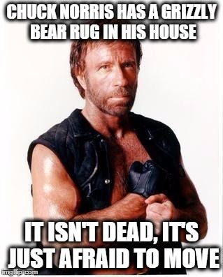 Chuck Norris Flex   CHUCK NORRIS HAS A GRIZZLY BEAR RUG IN HIS HOUSE IT ISN'T DEAD, IT'S JUST AFRAID TO MOVE   image tagged in memes,chuck norris flex,chuck norris   made w/ Imgflip meme maker
