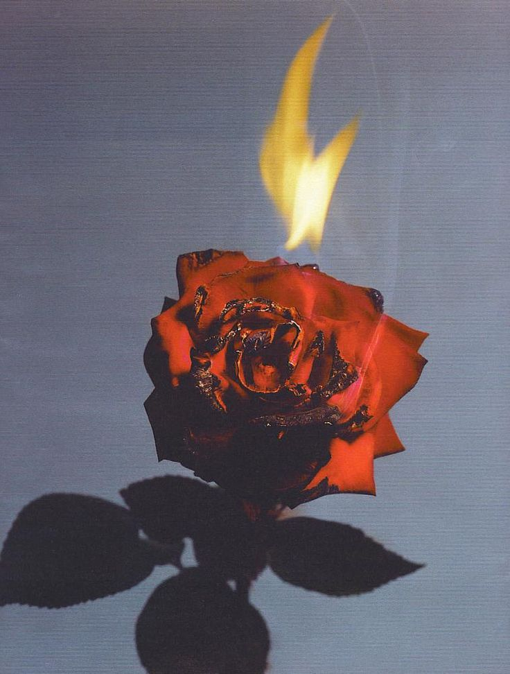 Baby you can light my fire Burning rose, Dystopian