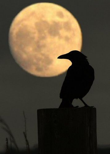 Bad Moon Rising by AMKs_Photos, via Flickr