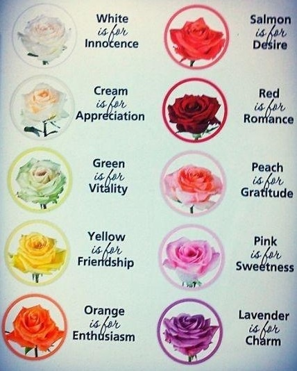 Color meaning of roses nature pinterest color for Meaning of flower colors