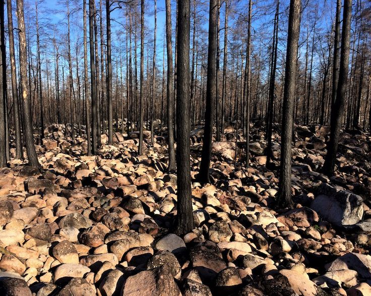 Bränd skog i Västmanland