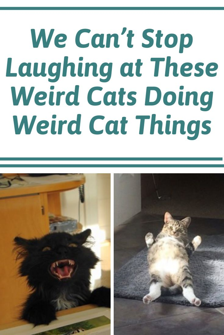 We Can't Stop Laughing at These Weird Cats Doing Weird Cat Things #cats #weird #Funny #LOL #entertainment