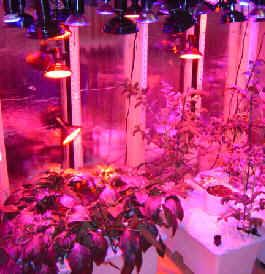 100W 230V LED plantelys