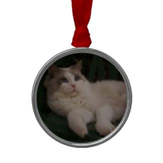 ... ornament featuring a photo of a gorgeous Ragdoll Cat #ragdoll #cat