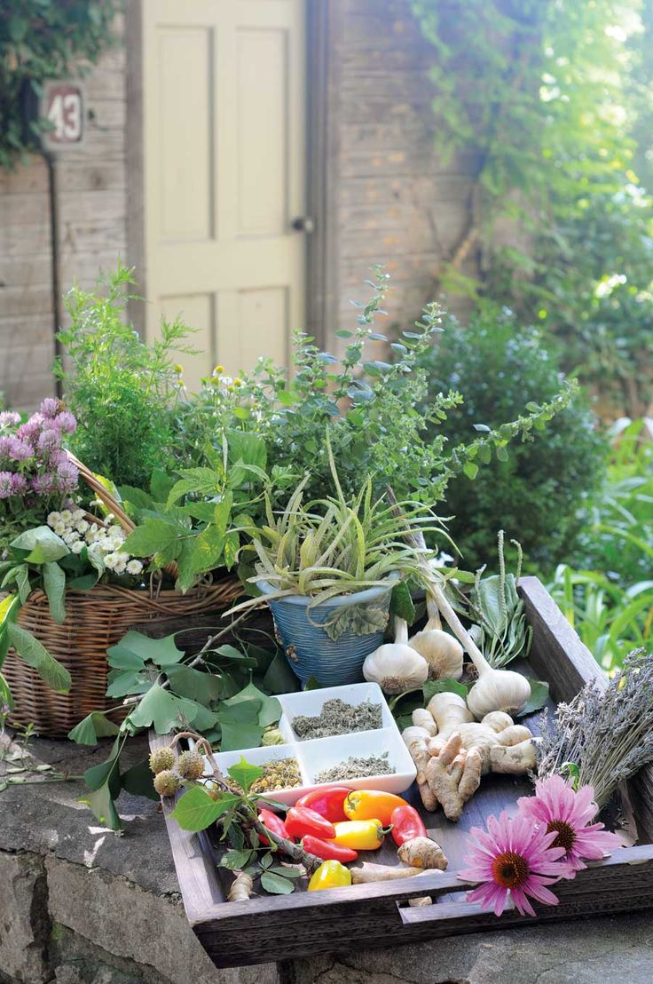 Grow a Garden with Healing Herbs and Plants—includes herbs for digestion, skin, coughs, colds and flu