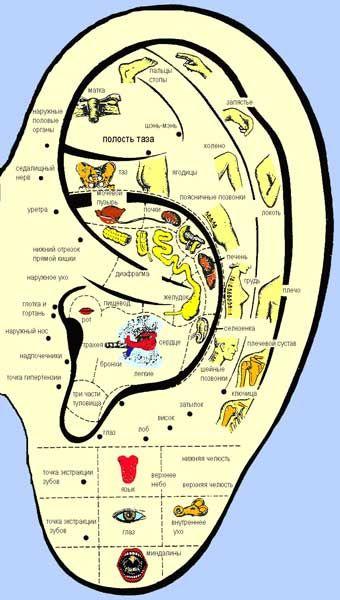 http://acupuncture.uz/image/aurik.jpg