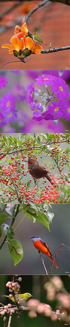 Красивые фотографии птиц и весенних цветов от тайваньского фотографа Lucia Lin | Удивительное и смешное в картинках