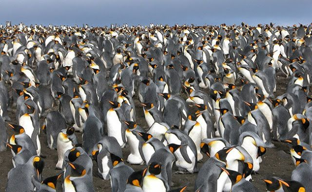 Penguin Study Reveals Southern Ocean S Ice Age History Southern Ocean Ocean Ecosystem Ocean