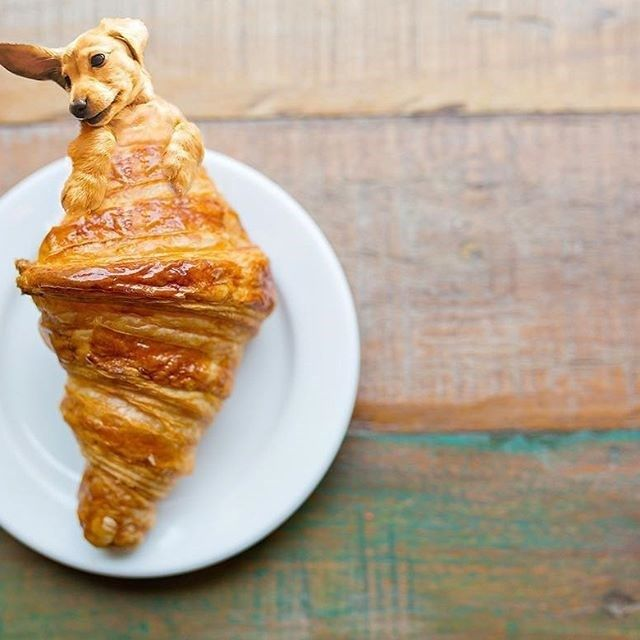 Dogs In Food Is An Instagram Overflowing With Our Favorite Things Food Humor Dog Food Recipes Food