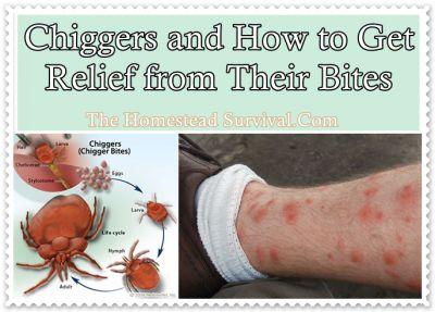 Best 25 Chigger Repellant Ideas On Pinterest Diy Gnat