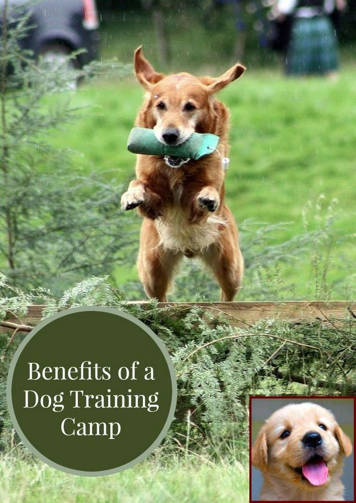 House Training A Puppy Rspca And Clicker Training Dogs Pros Cons